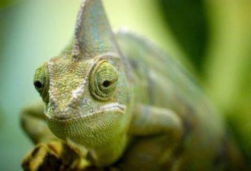 Komunikacja przy wykorzystaniu efektu kameleona jest udana.